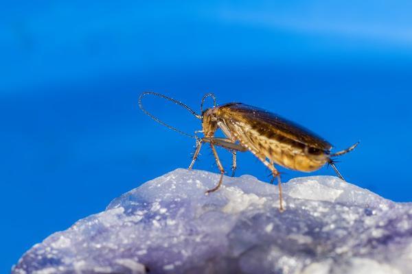 zwalczanie insektów warszawa
